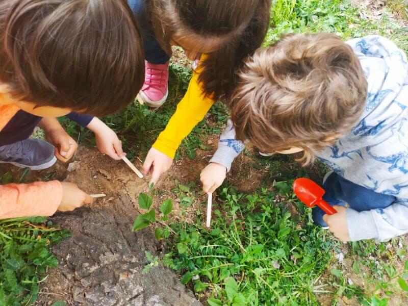 βοτανολογία κηπουρική